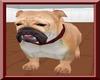 ~K~ British bulldog !
