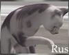 Rus Hairless Cat