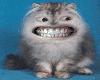 [AR]Grinning Cat