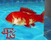 G&R FISH