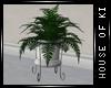 [Kiki] The Loft fern