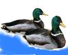 Animated Ducks & Sounds