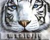 wzn White Tiger Pet
