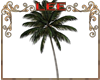 Beach palm animated