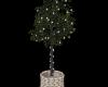 S954 Ficus w/WhiteLights