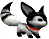 Black & White Head Fox