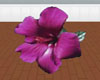 (LIR) Purple Hibiscus