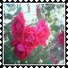 sticker_17637054_29548880