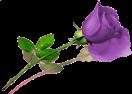 sticker_15462726_20246031