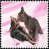 sticker_18386801_41272757
