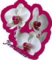 sticker_10388731_47353936