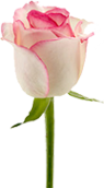 adesivo_29514235_47554029