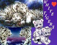 sticker_20385820_33447808