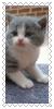 sticker_2500308_33526196