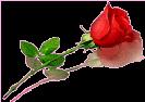 sticker_28208598_38421271