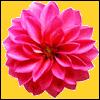 sticker_16376159_22568953