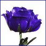 sticker_580910_6657194