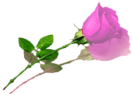sticker_15462726_20246103