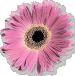 sticker_30767990_47181219