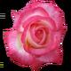 sticker_156634988_2
