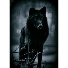 lwolff